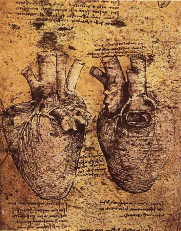 heart Leonardo_da_vinci,_Heart_and_its_Blood_Vessels